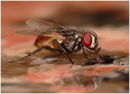 Dịch vụ diệt ruồi
