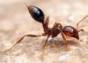 Dịch vụ diệt ruồi, muỗi, kiến, gián