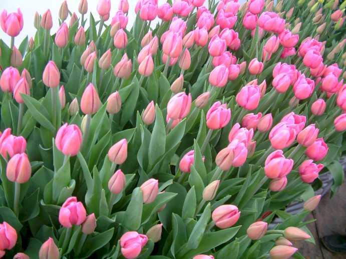 Hương hoa