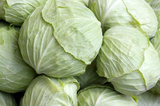 Bắp cải xanh Đà Lạt