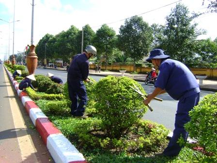 Dịch vụ cắt tỉa cây xanh