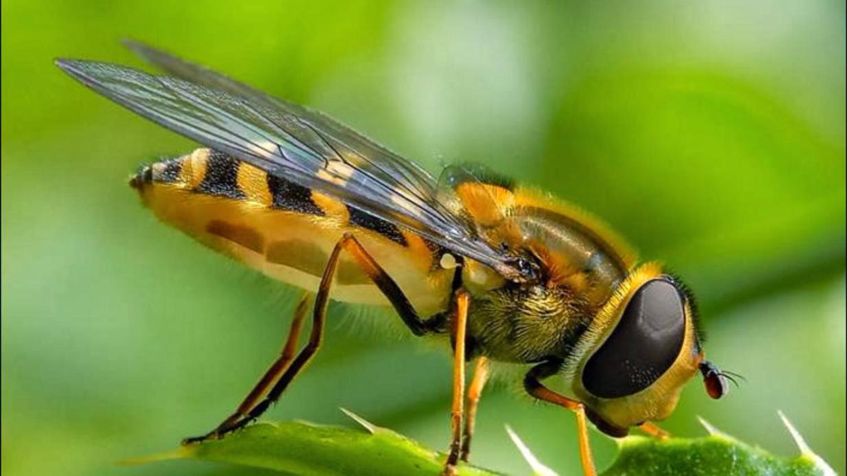Xoa đuổi ong