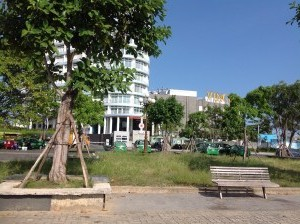 Dịch vụ chăm sóc cây xanh
