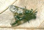 Dịch vụ diệt ruồi trâu