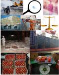 Giám định khiếu nại tổn thất hàng hóa tai nạn hàng hóa