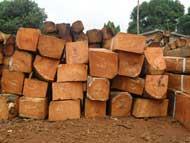 Nguyên liệu gỗ Hương