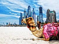 DL Dubai