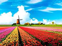 DL Hà Lan