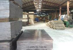 Coppha tre