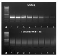 MyTaq DNA Polymerase