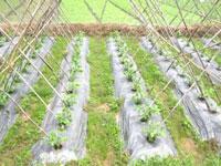 Màng PE nông nghiệp