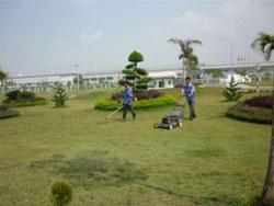Dịch vụ vệ sinh vườn