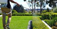 Phun thuốc cây cỏ