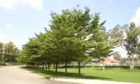 Thi công cây xanh công trình