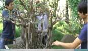 Thi công cây xanh