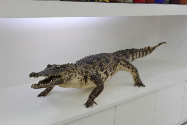 Cá sấu nhồi bông