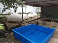 Bể nuôi thủy hải sản