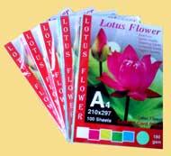 Bìa màu A4 Lotus (5 màu)