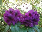 Hương hoa hạ