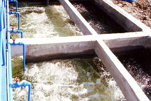 Hệ thống xử lý nước thải chăn nuôi