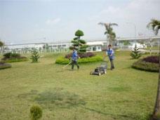 Cắt cỏ nhà xưởng định kỳ