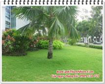 Cắt cỏ sân vườn