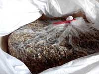 Bao jumbo đóng bắp ủ chua