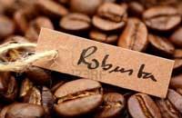 Cà phê hạt rang Robusta