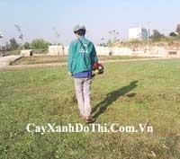 Dịch vụ bảo dưỡng cây xanh
