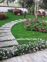 Thiết kế cảnh quan sân vườn