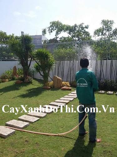 Dịch vụ tưới nước cây xanh