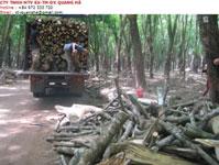 Củi gỗ
