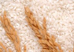 Gạo thông dụng