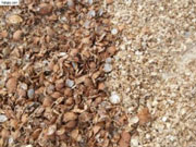 Bột vỏ sò