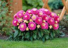 Cây hoa trồng