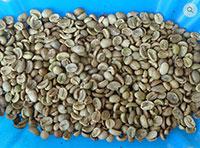 Cà phê nhân sống giá rẻ