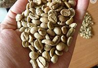 Cà phê Arabica nhân sống