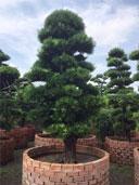 Cây xanh cây cảnh