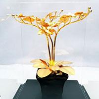 Cây địa lan để bàn dát vàng