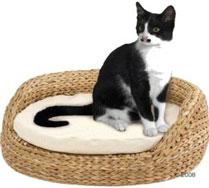 ổ mèo lục bình