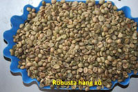 Robusta hang xo