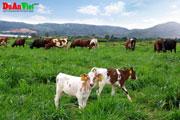 Dự án khu trang trại chăn nuôi kết hợp Sóc Sơn