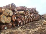 Dự án xuất khẩu gỗ và nội địa