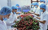 Dịch vụ xuất nhập khẩu nông sản