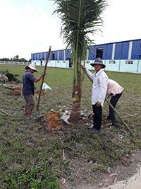 Dịch vụ chăm sóc bảo dưỡng cây xanh