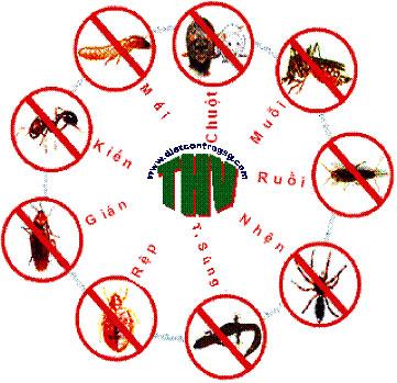 Dịch vụ diệt côn trùng hiệu quả