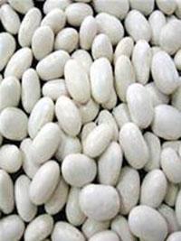 Hạt đậu trắng