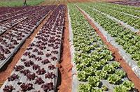 Màng PE phủ nông nghiệp