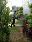 Dịch vụ xử lý côn trùng