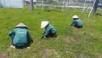 DV cắt tỉa cỏ